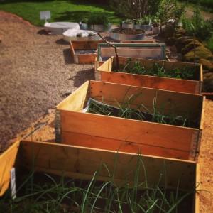 Får det plats fler odlingslådor?
