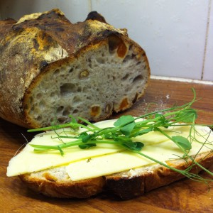 Valnöts- och aprikosbröd med gäseneost och nyskördade ärtskott