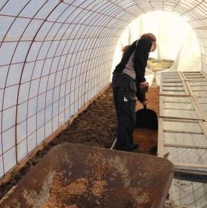 Odlingstunnel - Sågspån på gången