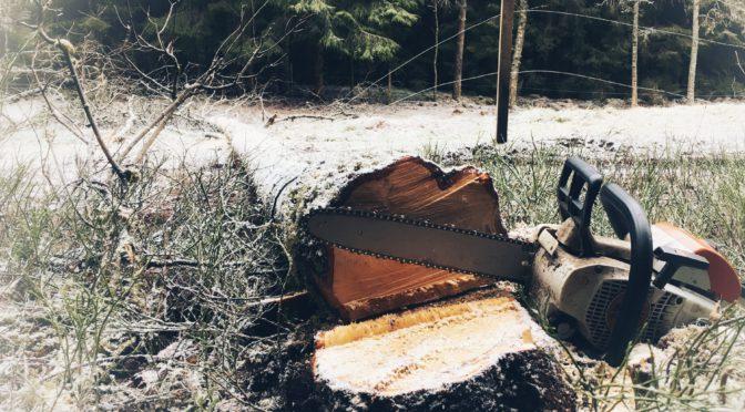 Uppvärmning i skogen