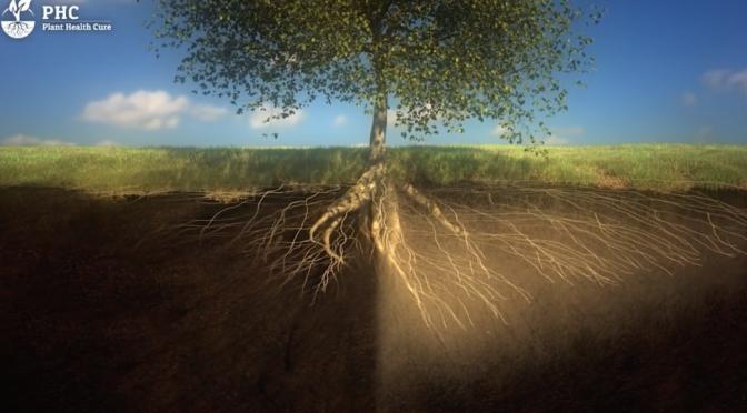 PHC Film - The living soil
