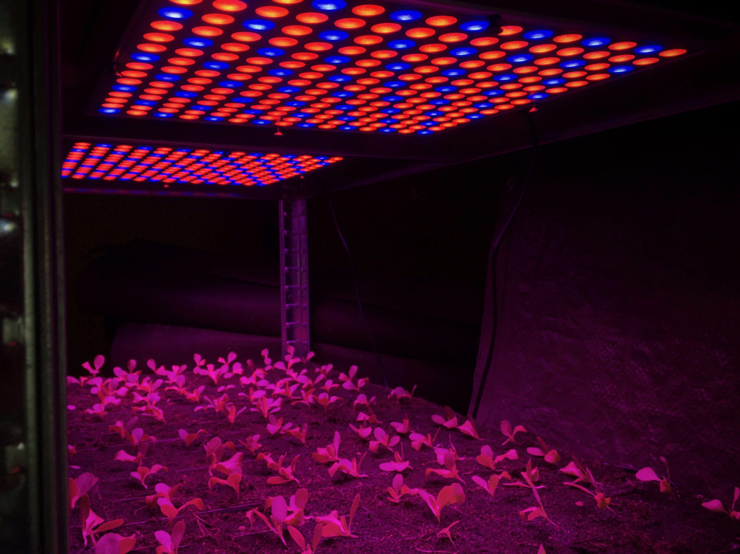Lumeri SQ100_LI LED växtbelysningspaneler