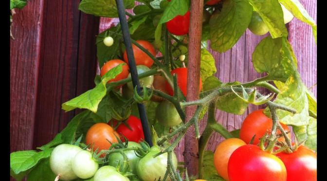 Växtföljd i armeringstunnlar