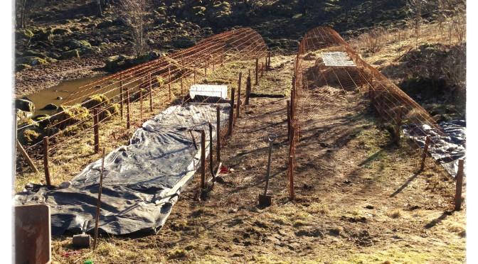 Bygge av odlingstunnel i Sundhult