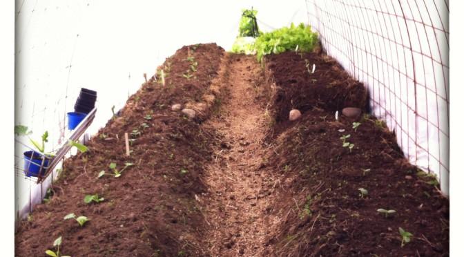 Bygge av odlingstunnel, del 2