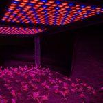 LED-belysning för att dra upp plantor