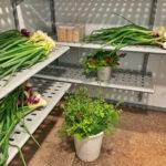 Grönsaker i vårt Porkka kylrum i Sundhult
