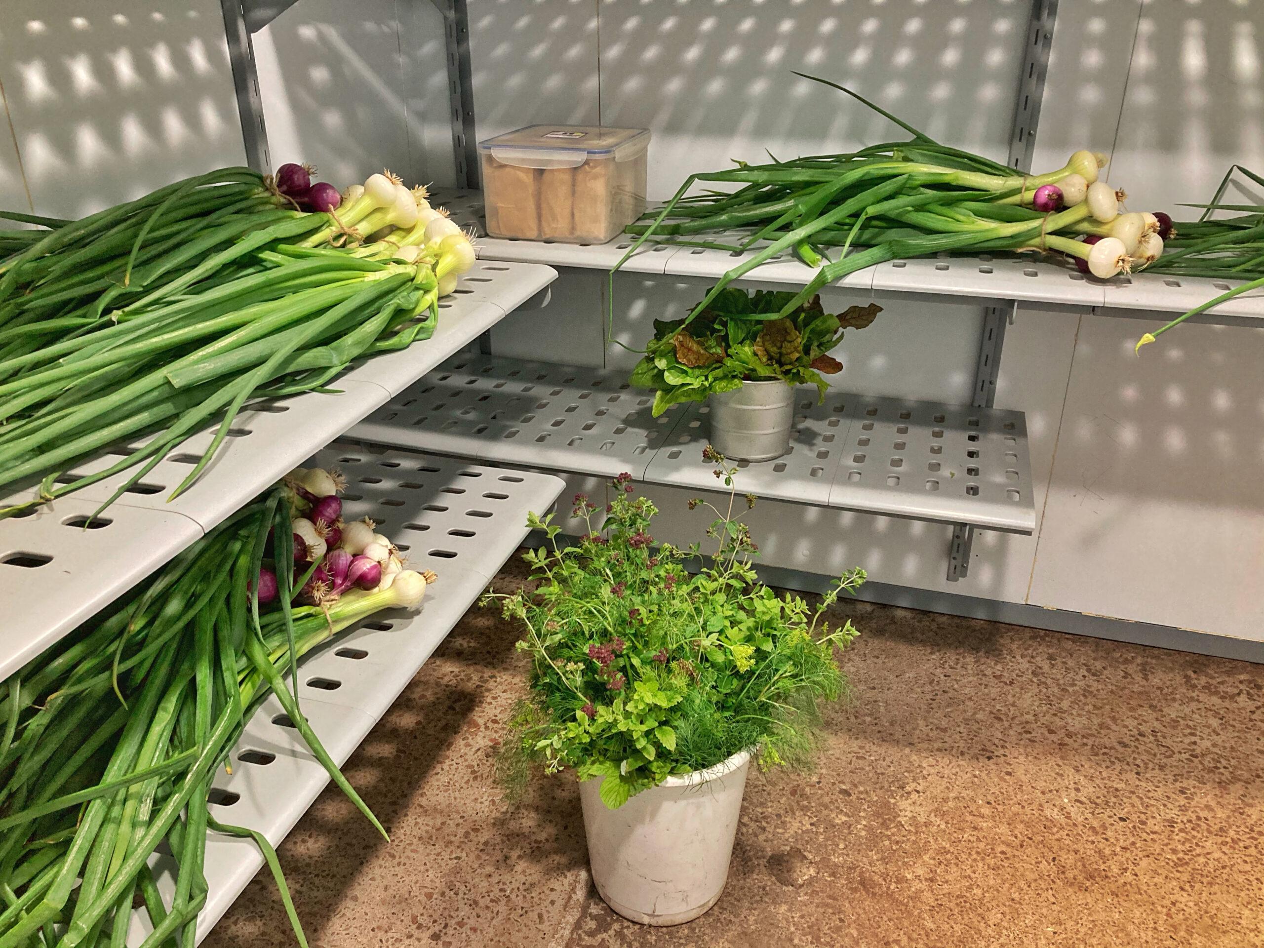 Grönsaker i kylrummet i Sundhult