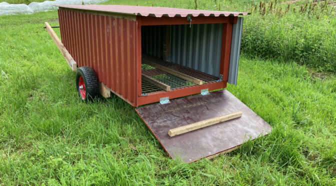 Lilltorpet - Rekreationssuga för hönsen i Sundhult