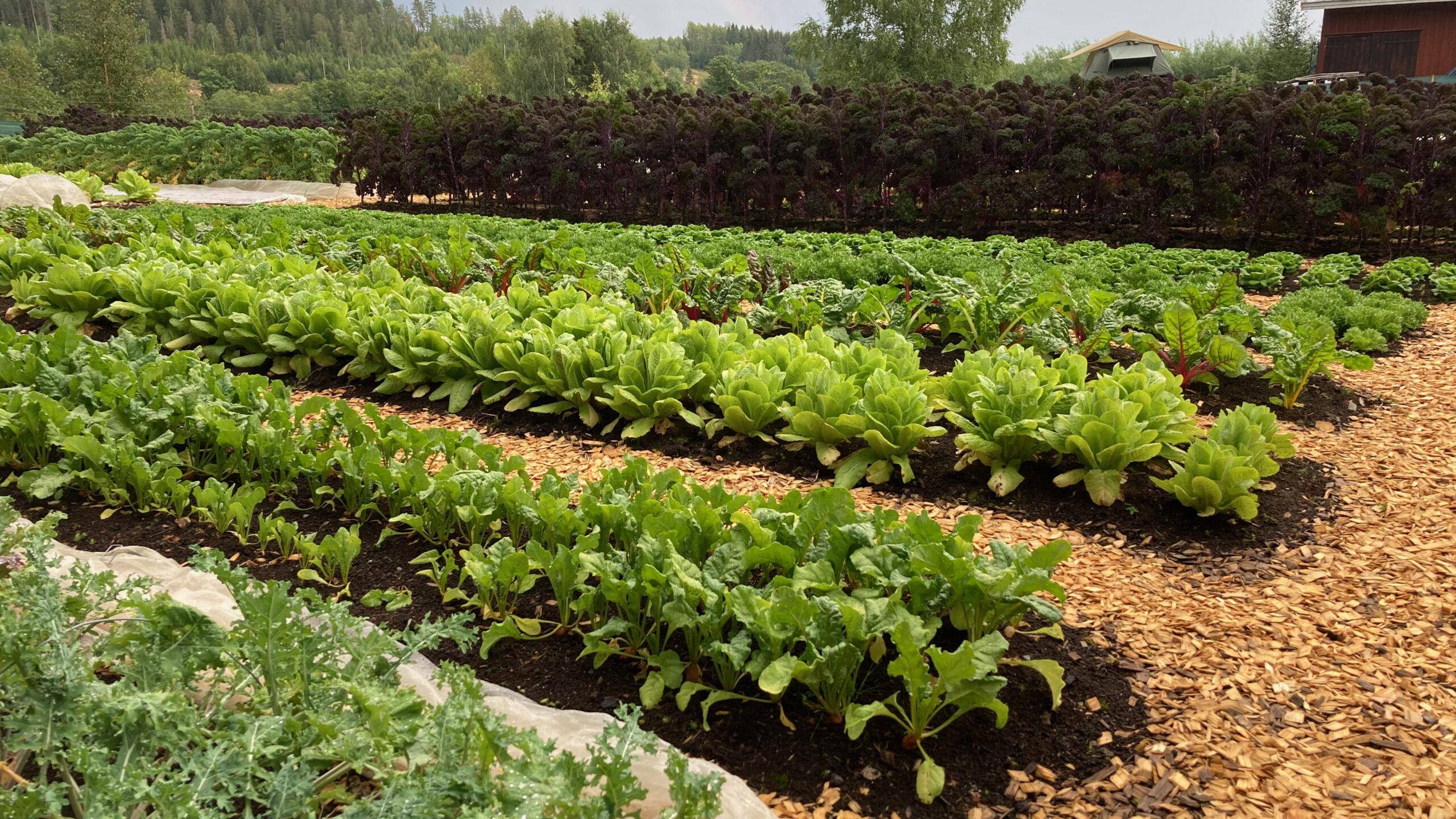Ridgedale Farm Marketgarden